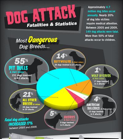 Dog Bite Attack Infographic
