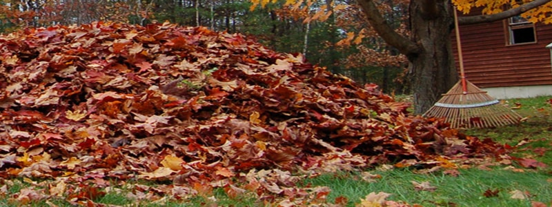 leaf-pile-autumn-weather-safety-vaughn-whitby